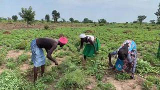 Afrika: Humanitárius válság