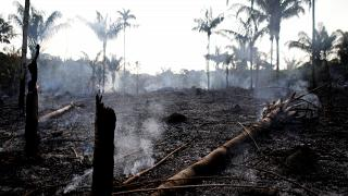 Amazon fires: Scientists mythbust Bolsonaro claims with satellite images