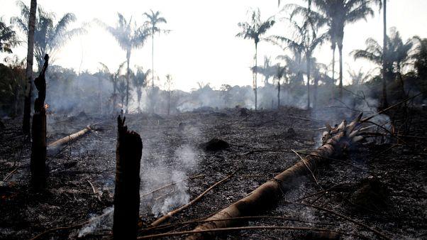 L'Amazzonia brasiliana in fiamme, ecco cosa accade durante gli incendi
