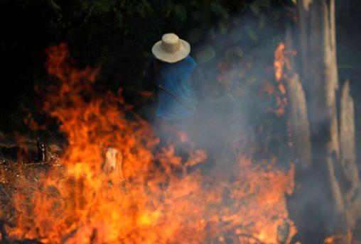 ЕС принуждает Бразилию к спасению лесов