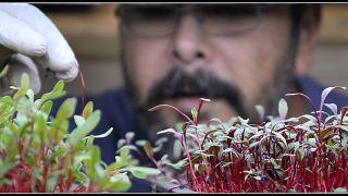 «Μικρός Καλλιεργητής»: Ο τραπεζικός που έγινε αγρότης!