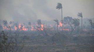 Bolíviában is tombol az erdőtűz