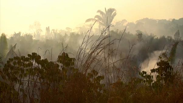 Kampf um die Amazonas-Wälder