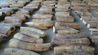 Peritos adiam proibição total do comércio de marfim