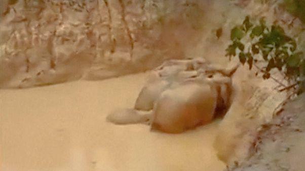 مالزی؛ فیلهای گرفتار در گودال پر از گل نجات پیدا کردند