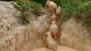 Слонам выкопали выход