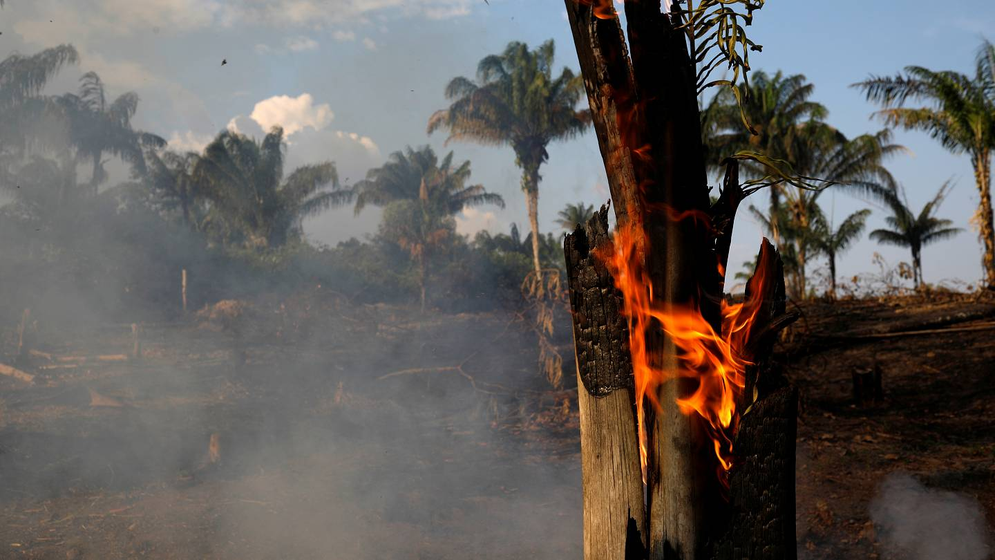 The Amazon Rainforest Is On Fire What Can You Do About It