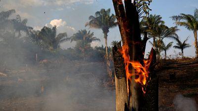 Amazon rainforest burning, Brazil