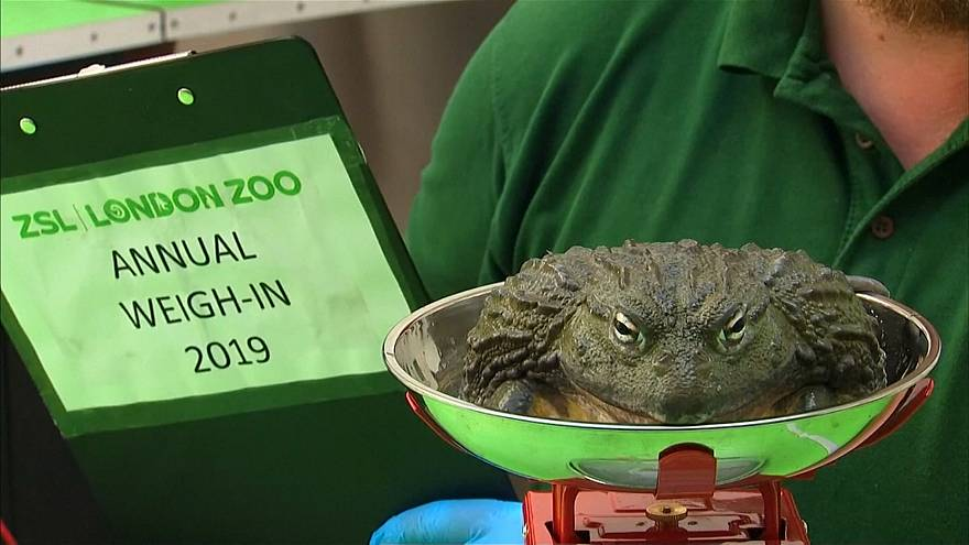 Penguins to porcupines hit the scales for annual London Zoo weigh-in