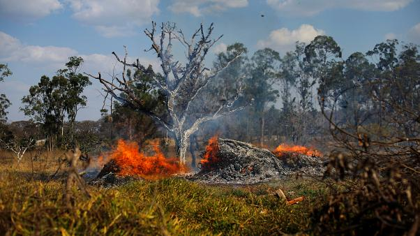 G7: спасти леса Амазонии