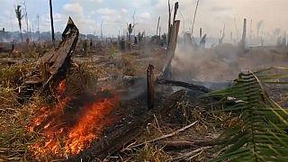 Brasilien: Spagat zwischen Umweltschutz und Wirtschaft