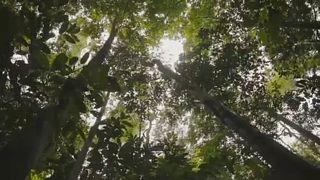 Bolsonaro rechaza dar garantías sobre la Amazonia pese a la presión internacional