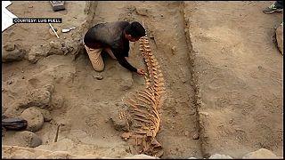 بقايا أحد حوتيْ العنبر اللذان اكتشافا في بيرو