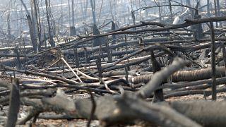 Área de selva amazónica arrasada por las llamas