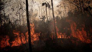 بعد ضغوط دولية .. البرازيل ترسل الجيش لمكافحة حرائق الأمازون