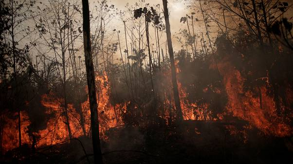 Bolsonaro mobilises Brazilian army to combat Amazon fires