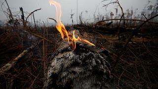 Dünyanın gözü Amazon Ormanları'nda: İki günde bin 663 yangın çıktı
