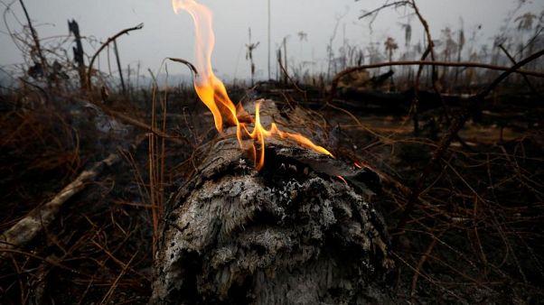 آتشسوزی جنگلهای آمازون؛ ارتش برزیل به یاری آتشنشانان میشتابد