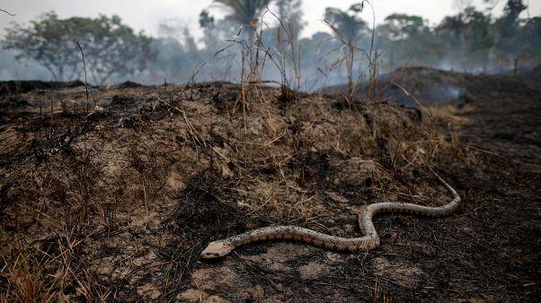 SOS εκπέμπει η Αμαζονία