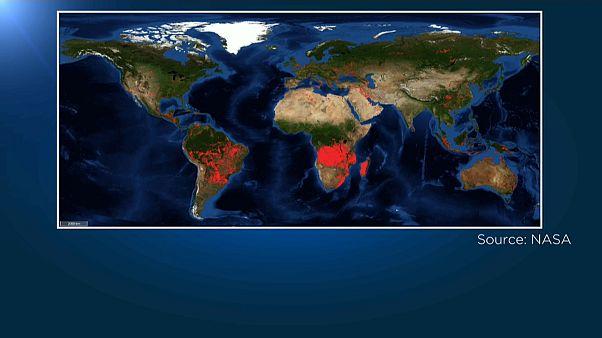 Nicht nur in Brasilien: Starker Anstieg der Waldbrände