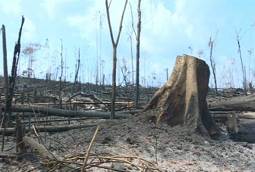 Firefighters tackle blaze in devastated Amazon rainforest