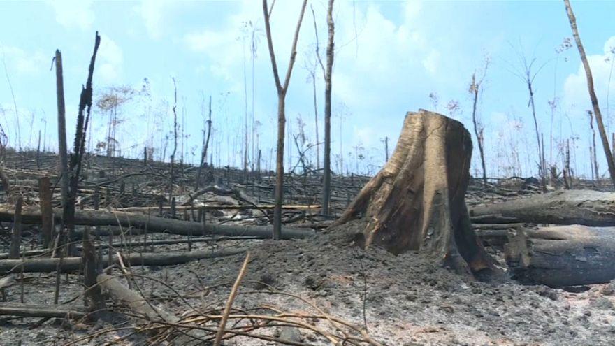Cinzas e destruição na Amazónia brasileira