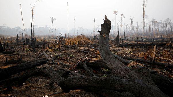 Azonnali, 20 millió eurós segélyt nyújtanak az esőerdőt pusztító tűz megfékezésére a G7-ek