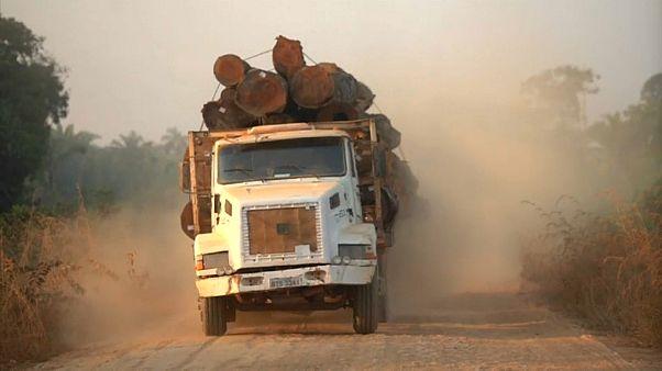 Amazonları yok eden şirketlerin Avrupalı ve ABD'li müşterileri
