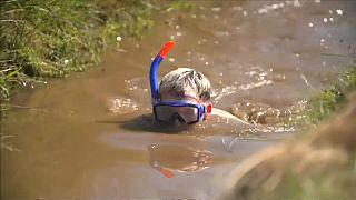 Snorkelling nos pântanos
