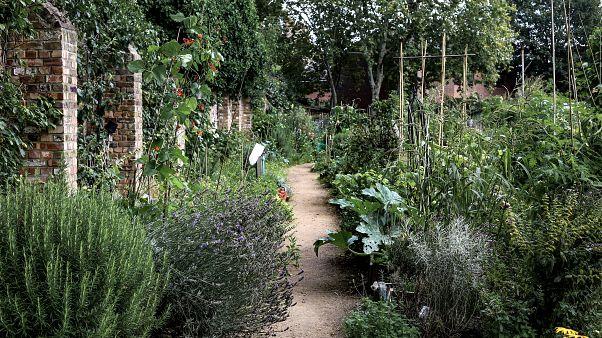King Henry's Walk Garden