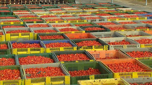Todo listo para la Tomatina, la fiesta más internacional de Buñol
