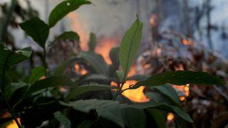 Пожар поссорил Болсонару с Макроном