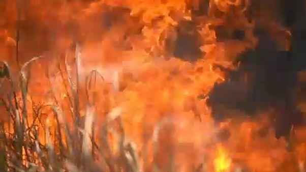 Regenwald brennt: Beleidigter Bolsonaro fordert Entschuldigung