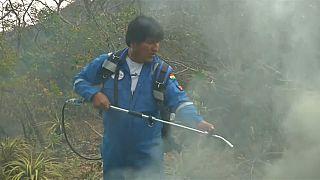 الرئيس ايفو موراليس يساهم في اطفاء حرائق الغابات
