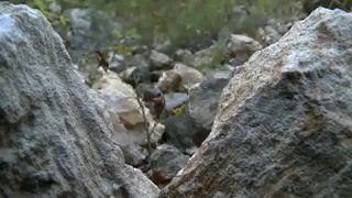 Bányavita a Pilisben - egyelőre nem nyitják meg a kőbányát