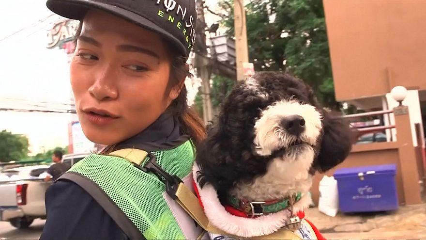 رفتگر بانکوکی با همراهی سگش خیابانها را تمیز میکند