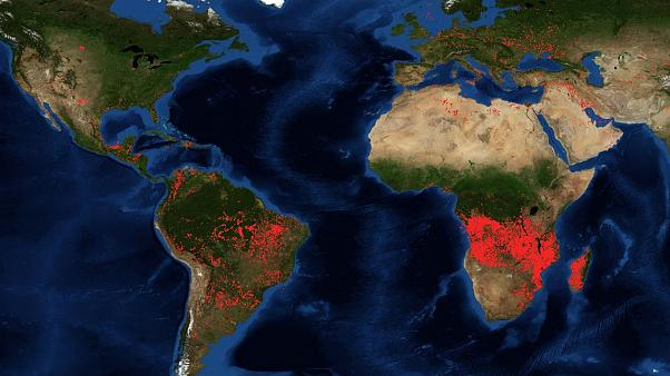 Should we compare Amazon forest fires to those in central Africa