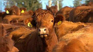 Türkiye et fiyatlarında Avrupa'da ucuz ülkelerden birisi