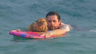 شاهد: كلاب وأصحابها في سباق للسباحة