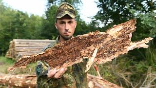 Germania: foreste a rischio, interviene l'esercito