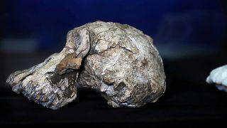 Etiyopya'da büyük keşif: 3,8 milyon yıl önce yaşamış ilk insana ait kafatası bulundu