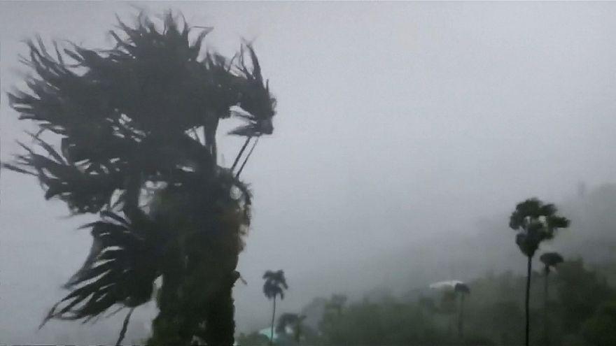 جدال سخت طوفان دوریان با درختها