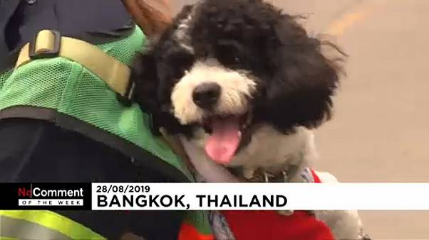 Ταϊλάνδη: Η νέα μόδα «φέρε τον σκύλο σου στη δουλειά»