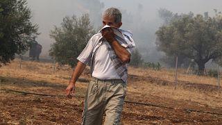 Φωτιές σε Λούτσα, Τανάγρα και Πεντέλη