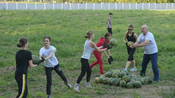 """شاهد: رئيس بيلاروسيا و""""رفيقاته"""" في حصاد البطيخ"""
