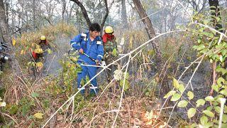 شاهد: بعد مساعدته رجال الإطفاء لإخماد حرائق الغابات رئيس بوليفيا يتوه في الأدغال