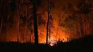 Amazon wildfires spread, with 72,843 detected so far this year