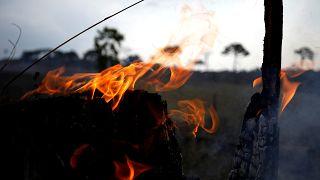 ¿Crucial o simbólica? Expertos cuestionan la ayuda internacional para los incendios en el Amazonas