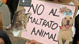 Владельцы животных и их питомцы протестуют вместе