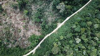 Is the Amazon forest really 'the lungs of the planet'?